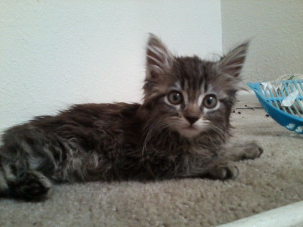 pictures of cats forum poc
