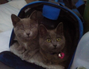 Princess and PussPussPuss in a cat carrier