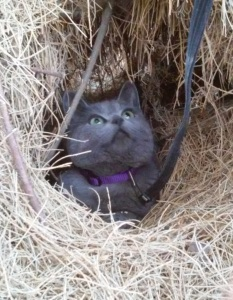 pusspuss in a pine needle hole