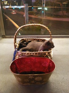 PussPussPuss in a golden basket with a golden tip trough - IMG_20150527-205730